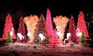 Wild Lights @ Saint Louis Zoo | St. Louis | Missouri | United States