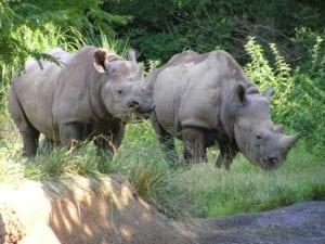 Bowling for Rhinos @ Tropicana Lanes