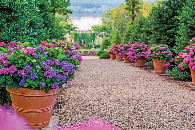 From The Garden Hydrangeas Town Style